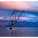 Lake Wanaka by kelpie1