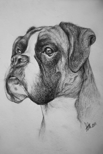 A5 boxer drawing flickr photo sharing - Dessin chien boxer ...