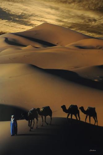africa sunset sky man animals geotagged sand tramonto desert dunes dune uomo cielo marocco animali deserto sabbia ghostbuster kartpostal gigi49