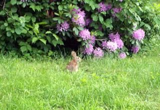 Bunny_6711e