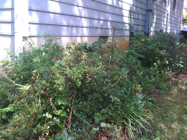 how to kill pricker weeds
