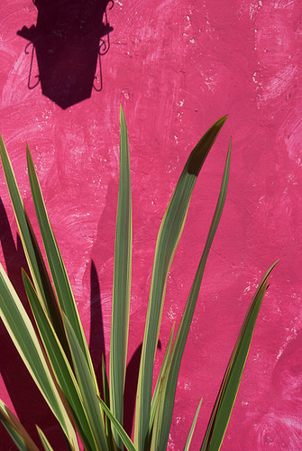 pink plant abstract green lamp colors leaves silhouette wall contrast colombia paint shadows colonial vegetation villadeleyva boyaca