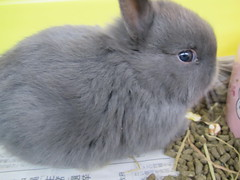 animal, rabbit, domestic rabbit, pet, fauna, angora rabbit, rabits and hares,