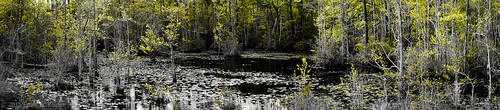 local horrycounty jonesbigswampsc