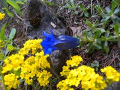 110417_BotanischerGarten 074