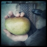 Carrying a pear down Michigan Avenue makes me realize the mass of a pear
