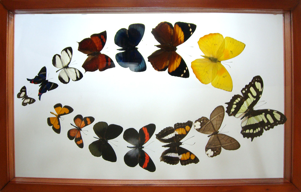 Ben the Butterfly Guy\'s most recent Flickr photos | Picssr