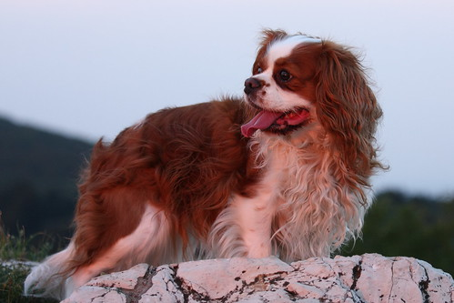 Susie in sunset