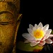 buddha-wallpapers-photos-pictures-h2o-lily
