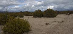 The Wilderness Area Scientific Reserve