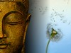 buddha-wallpapers-photos-pictures-dandelion