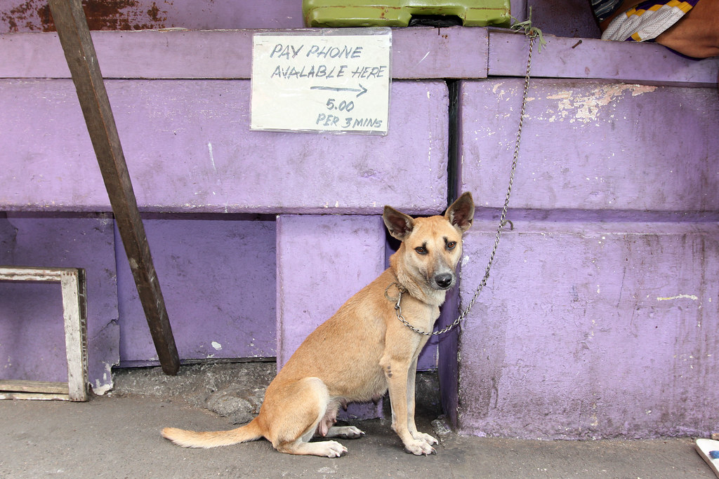 dog in front of purple wall 2