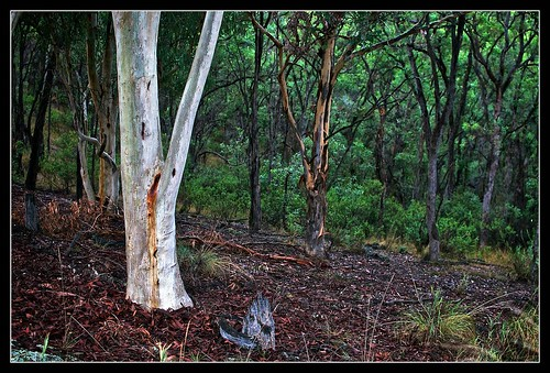 The Australian Bush 1