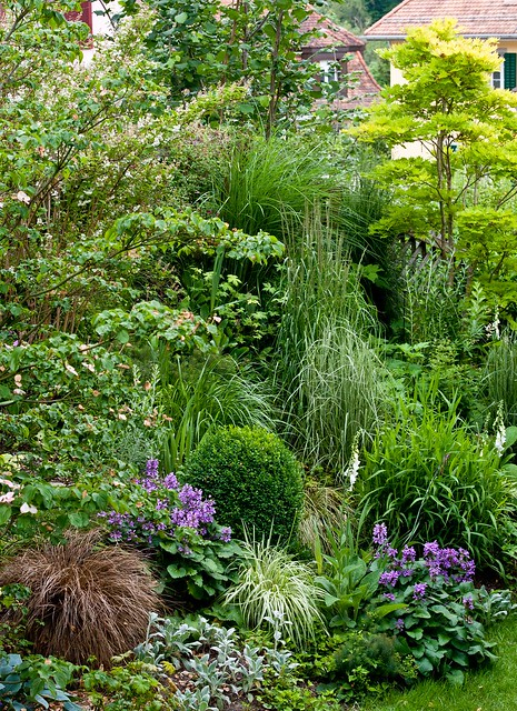 Our ornamental grass border flickr photo sharing for Small decorative grasses
