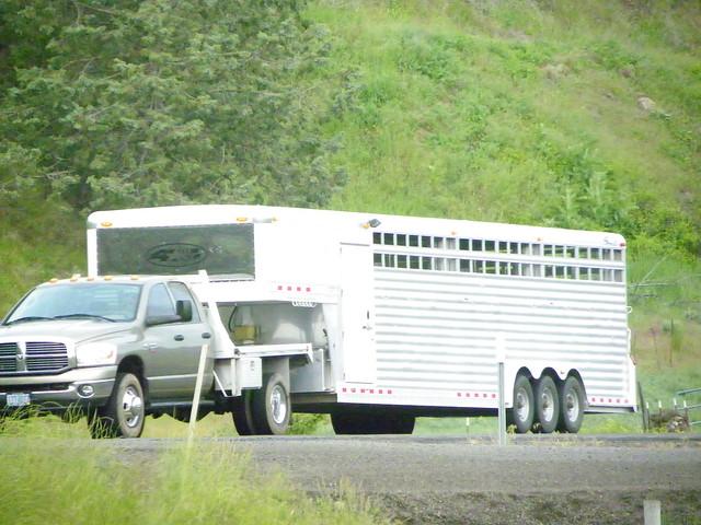 dodge truck pulling tri axle stock trailer