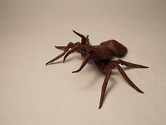 Hormiga - Ant - Eciton burcelli Paper Ant 1 Photos 057