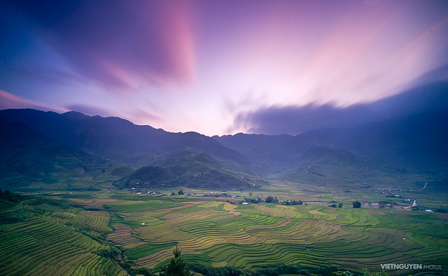 Rice fields on terraced of Mu Cang Chai, YenBai, Rice fields prepare the harvest at Northwest Vietnam