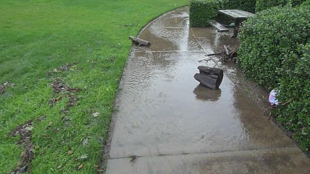 Debris and ducks
