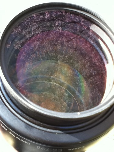 Lens and cherry blossoms