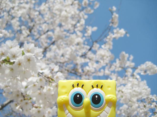spring :D, Canon IXY DIGITAL 10