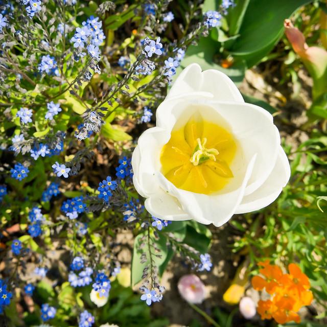 montage floral flickr photo sharing. Black Bedroom Furniture Sets. Home Design Ideas