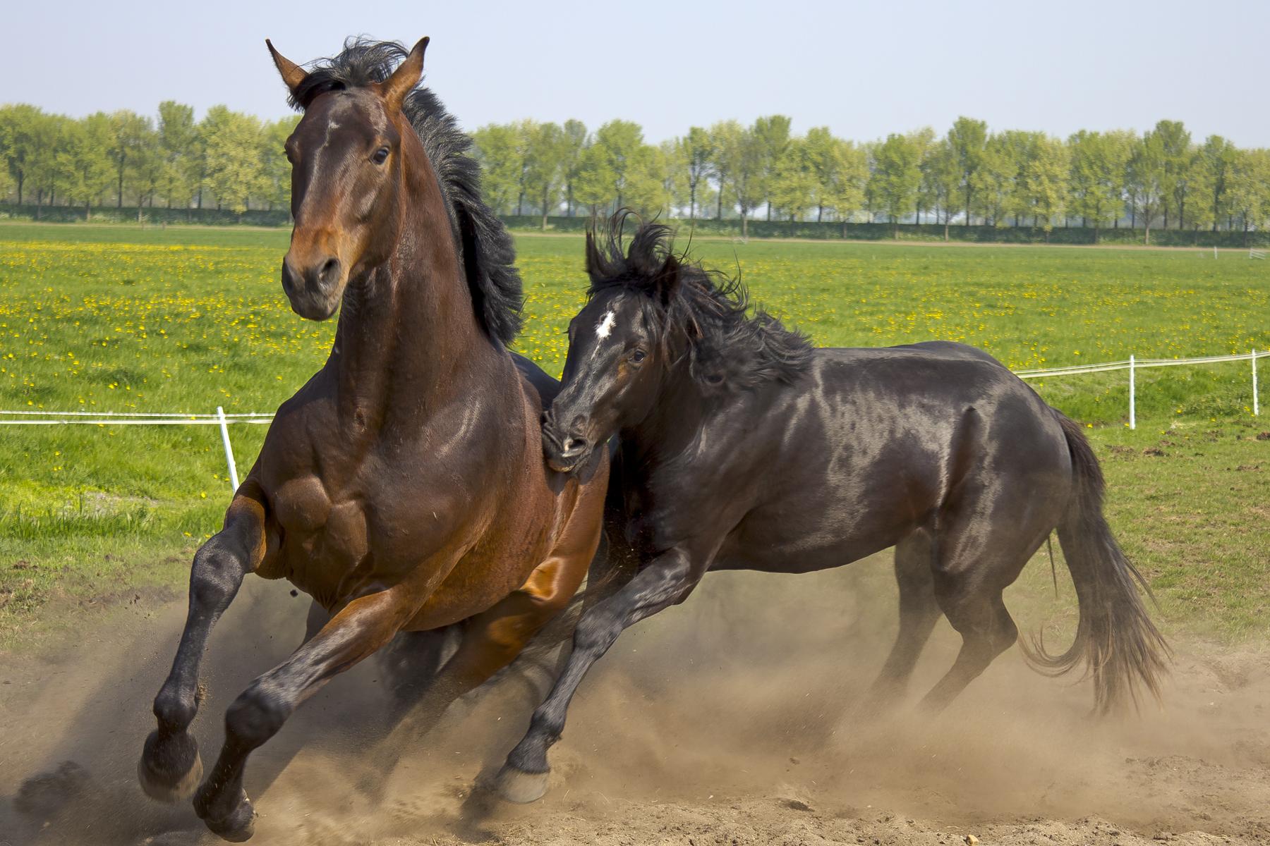 Wild Horses Flickr Photo Sharing