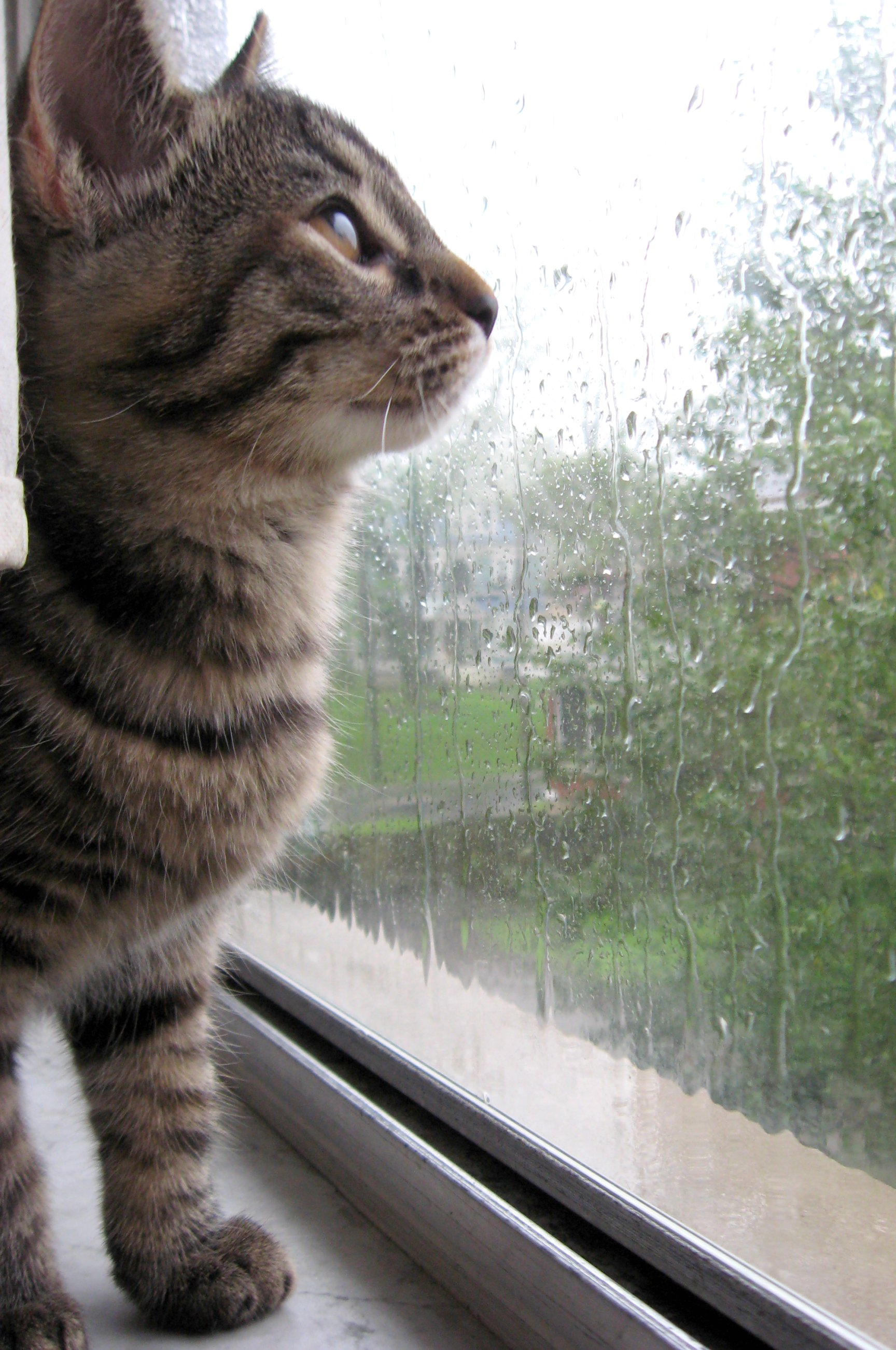 Cat in the rain essay