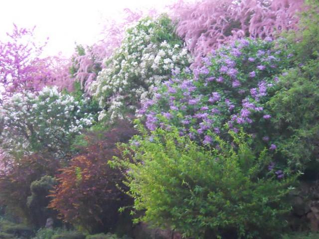 Arbustos en flor 4