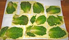 vegetable, leaf, leaf vegetable, produce, food, collard greens,
