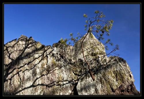 mountain tree nc hiking northcarolina hike stateparks crowdersmountainstatepark