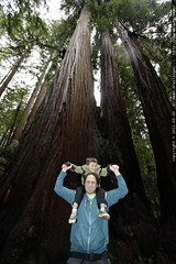 shoulder ride under the redwoods