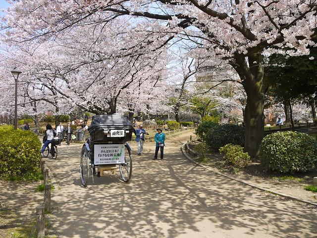 Sakura at Sumida Park