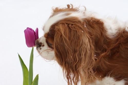 Susie smells a tulip