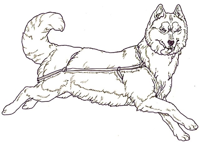 alaskan dog sled coloring pages - photo#21
