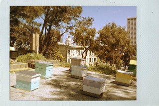 Bees on the Former Freeway Onramp at Hayes Valley Farm