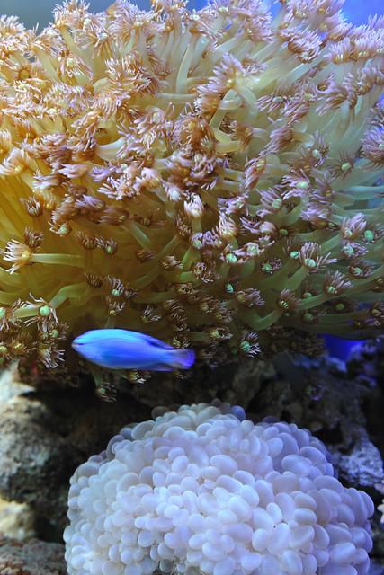 Guangzhou Fang Cun coral