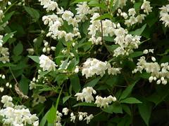 神代植物公園 花
