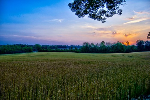 sunset sky sun field mississippi spring wheat fields hdr wheatfield hattiesburg 2011 sumrall
