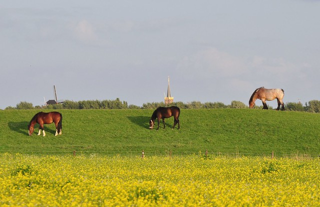 Three Horses, a Windmill and a Churchtower