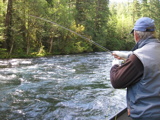 Mckenzie fishing fine despite high water the caddis fly for Mckenzie river fishing
