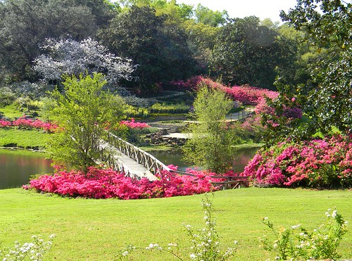 azaleas mirrorlake alabama cherryblossoms mobileal bellingrathgardens rusticbridge theodoreal