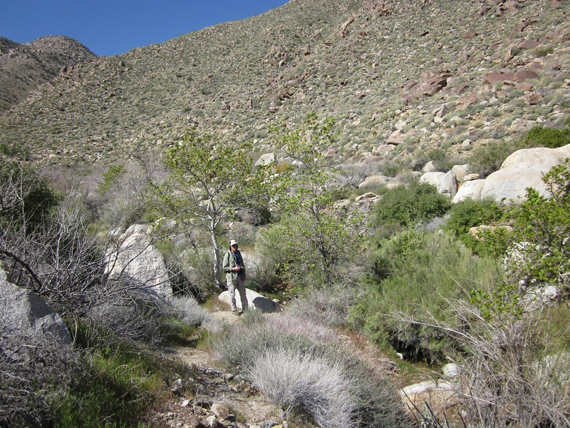 Me, hiking the very faint Indian Canyon Trail