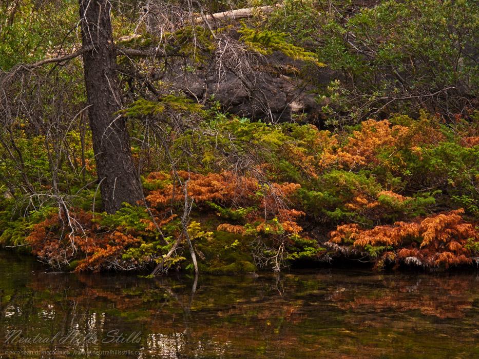 Grassi Lakes: Some Local Colour