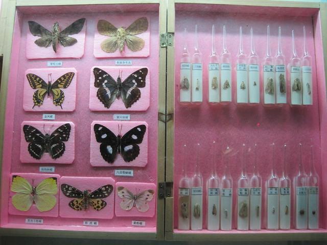 蝴蝶、昆虫类 (8)