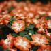 植物园 by 35mm world