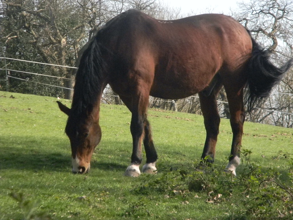 Horse Oxted Circular