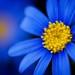zoom to blue by helen sotiriadis
