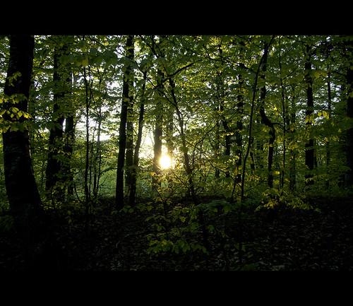light sunset summer night forest canon landscape denmark silk filter nd grad frederikshavn ndgrad rasmuserichsenphotography