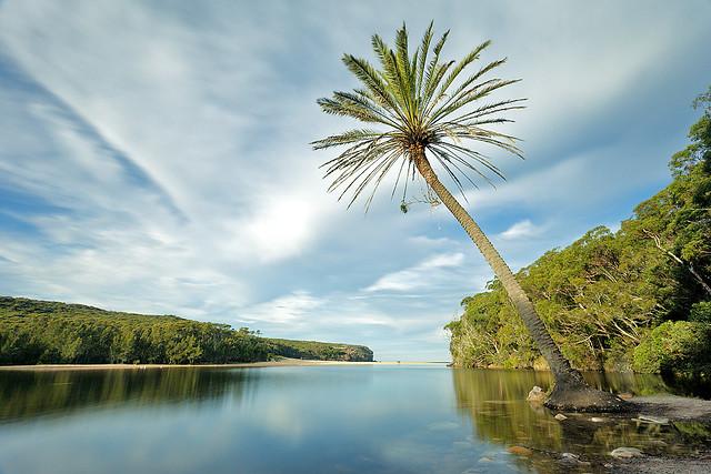 Wattamolla Palm