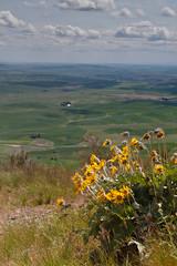 Palouse from Steptoe Butte
